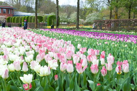 hectares: Keukenhof is the worlds largest flower garden with 7 million flower bulbs on an area of 32 hectares. Keukenhof Garden, Lisse, Netherlands - April 08, 2014.
