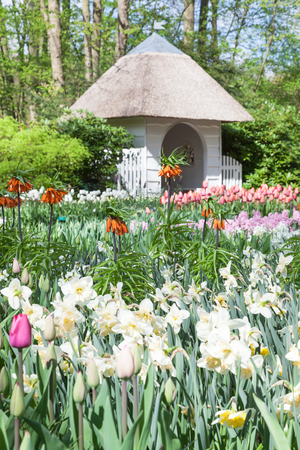 Keukenhof Garden, Lisse, Netherlands photo