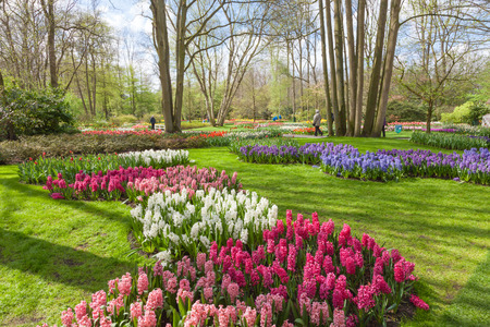 Keukenhof- Tulip Garden- Netherlands photo