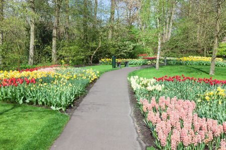 Colorful flowers and blossom in dutch spring garden Keukenhof (Lisse, Netherlands) photo
