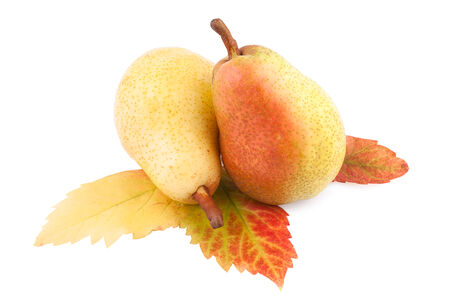 Pears with Autumn Leaf isolated  photo