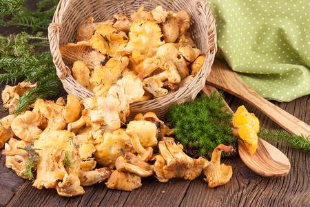 Chanterelles Mushrooms on Wooden Background