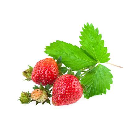 Organic Strawberries photo