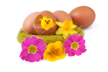 Easter eggs decoration nest yellow chicks photo