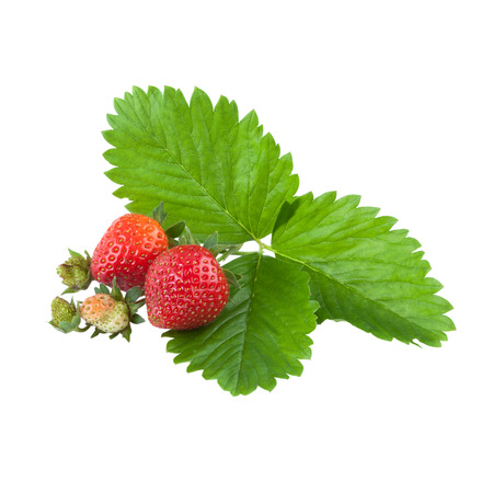over white: organic strawberries with leaves over white
