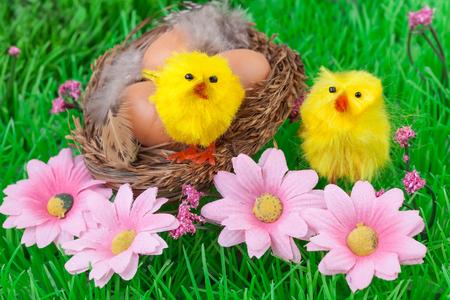 Easter eggs green grass yellow chicks photo