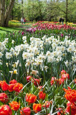keukenhof: Different Spring Flowers in dutch Spring Garden Keukenhof, Lisse, Netherlands. Stock Photo