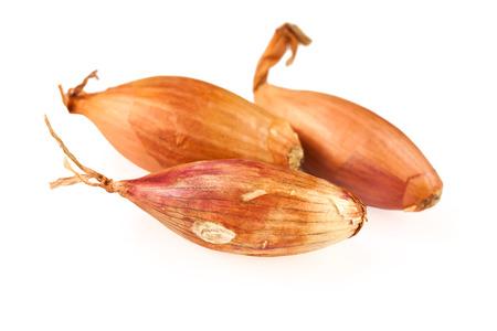 shallot: shallot onion