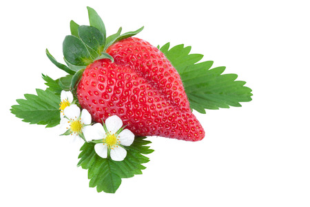 bio strawberry with green leaves and flowers photo