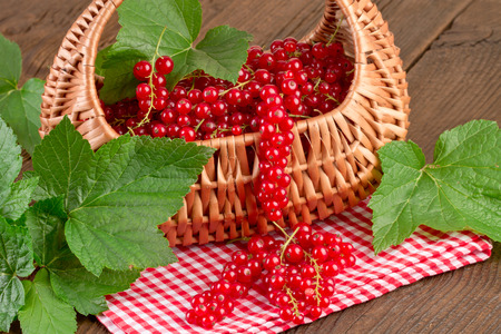 redcurrant: Redcurrant on red checkered tablecloth