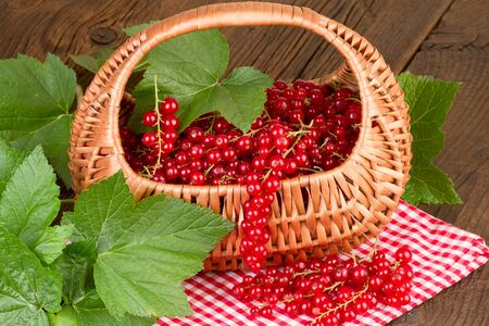 redcurrant: Redcurrant in basket on red checkered tablecloth
