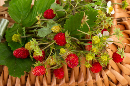 Woodland Strawberries in close-up Stock Photo