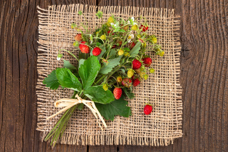 wild strawberry: Wild strawberry vintage background Stock Photo