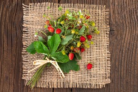 'wild strawberry: Wild strawberry vintage background Stock Photo