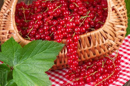 redcurrant: Basket full of redcurrant with green leaves on red checkered tablecloth