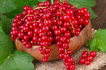redcurrant: Redcurrant bowl
