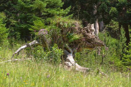 woodland sculpture: kangaroo wonders of nature, kangaroo sculpture natural wonder in a forest