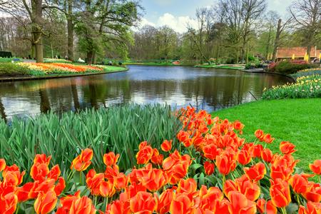 keukenhof: Tulips in Keukenhof Garden, Netherlands.