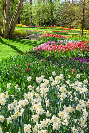 lisse: Cheerful Spring Flowers in Keukenhof Garden, Lisse, Netherlands Stock Photo