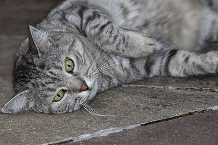 contentment: Grey striped cat relaxing on warm stones