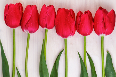 straight line: Red Tulips Straight Line Wooden Background Stock Photo