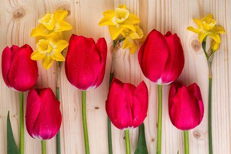 tulipan: Wesoły wiosenne kwiaty Zbliżenie