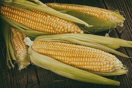 corn on the cob: Corn cob on old wood Vintage Style Stock Photo