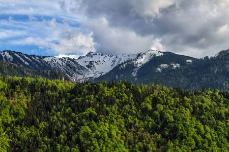 snow covered mountains: Spring landscape with green forest and snow covered mountains Stock Photo