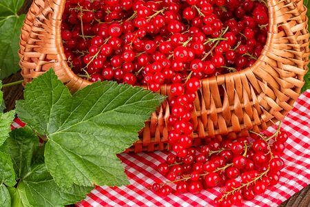 red currant: basket full with red currant