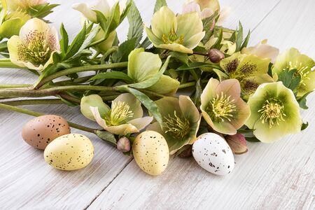 colores pastel: colores pastel de la decoración de Pascua flores Foto de archivo