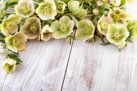 colores pastel: flores de la primavera colores pastel tarjeta de Pascua