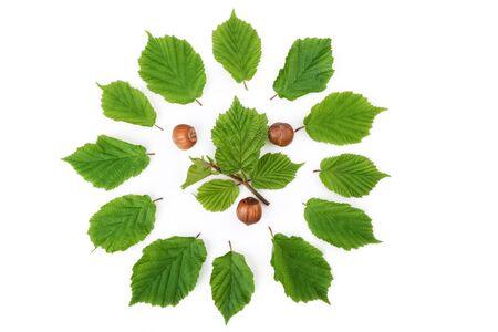 filbert nut: Hazelnuts pattern with green leaves  in round shape on white. Top view.