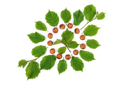 filbert nut: Green pattern with filbert nuts and nuts leaves. Flat lay, top view.