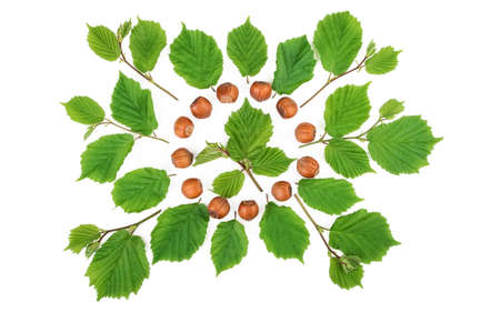 filbert: Filbert nuts with green leaves bright pattern on white. Flat lay, top view.
