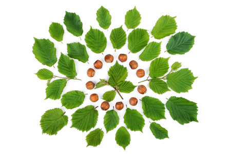 filbert nut: Green leaves with filbert nuts arranged in round shape on white. Top view. Stock Photo