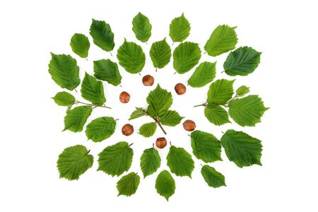 filbert nut: Creative arrangement of filbert nuts with leaves on white. Flat lay, top view.