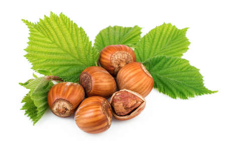 filbert nut: Hazelnuts organic plant with leaves on white background