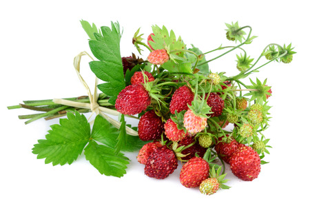'wild strawberry: Wild strawberry. Woodland strawberry with leaves on white. Stock Photo