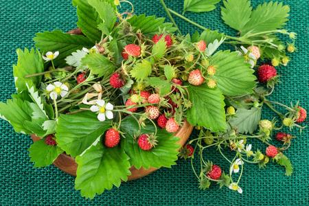 'wild strawberry: Wild strawberry or woodland strawberry on jute fabric background.