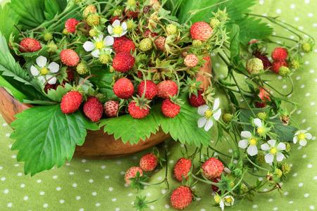 'wild strawberry: Wild strawberry on green polka dot background.