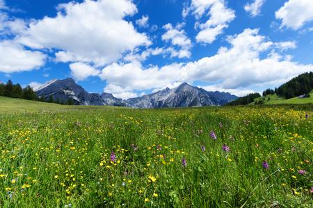 Prairie alpine sur une journée de soleil avec des pics de montagne en arrière-plan. Autriche, Tyrol, Walderalm.