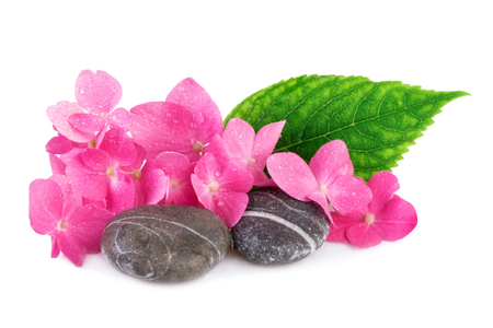 spa stone: Spa stone with pink flower on white