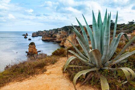 agave: costa del Algarve con la planta de agave en primer plano