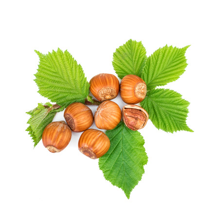 filbert nut: filbert nuts with leaves on white