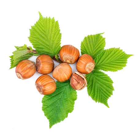 filbert nut: Hazelnut or filbert nuts with leaves on white. Top view.
