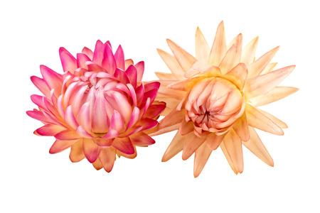 flores secas: Flores secas. Las flores secas aislados sobre fondo blanco. Foto de archivo