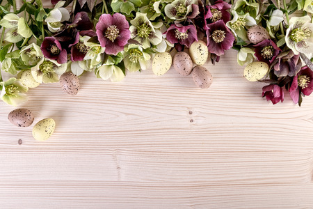 Easter decoration with spring flowers of hellebore lenten roses on light wooden background. Top view, copy space