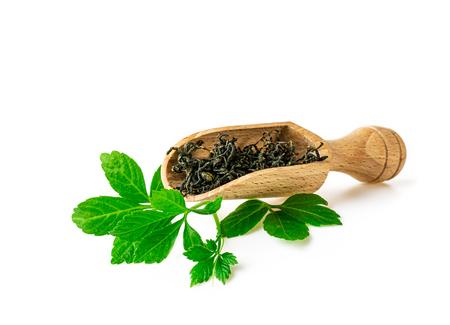 Jiaogulan Miracle grass leaf Chinese herb tea in spoon on white Standard-Bild