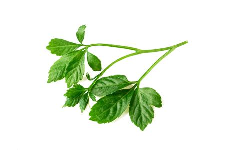 Miracle Grass Leaf Jiaogulan Gynostemma Plant Isolated On White