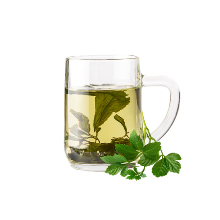 Chinese herb tea Jiaogulan Miracle grass. Image included clipping path Standard-Bild